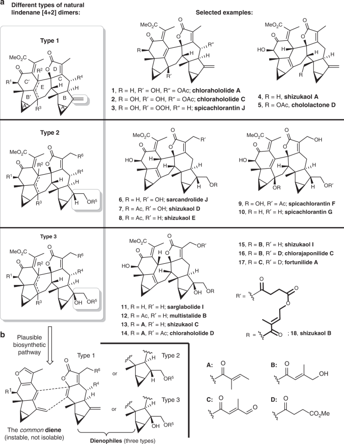A unified strategy toward total syntheses of lindenane
