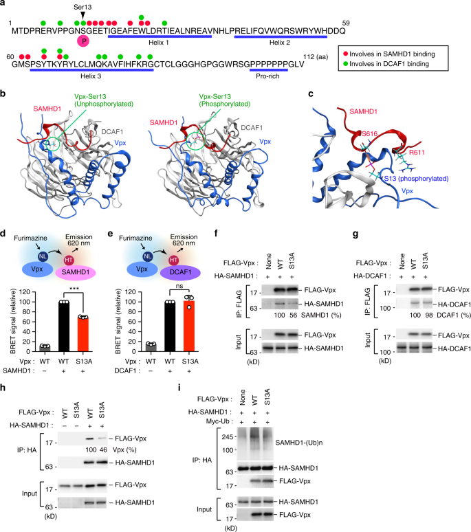 PIM kinases facilitate lentiviral evasion from SAMHD1 restriction