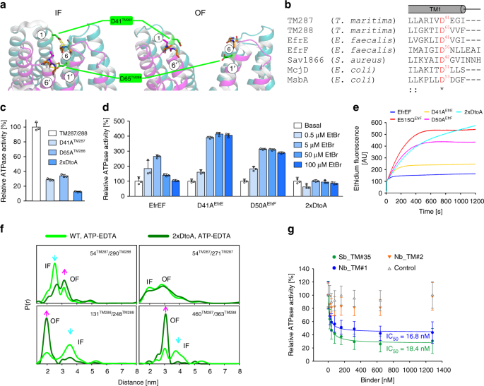 The extracellular gate shapes the energy profile of an ABC exporter