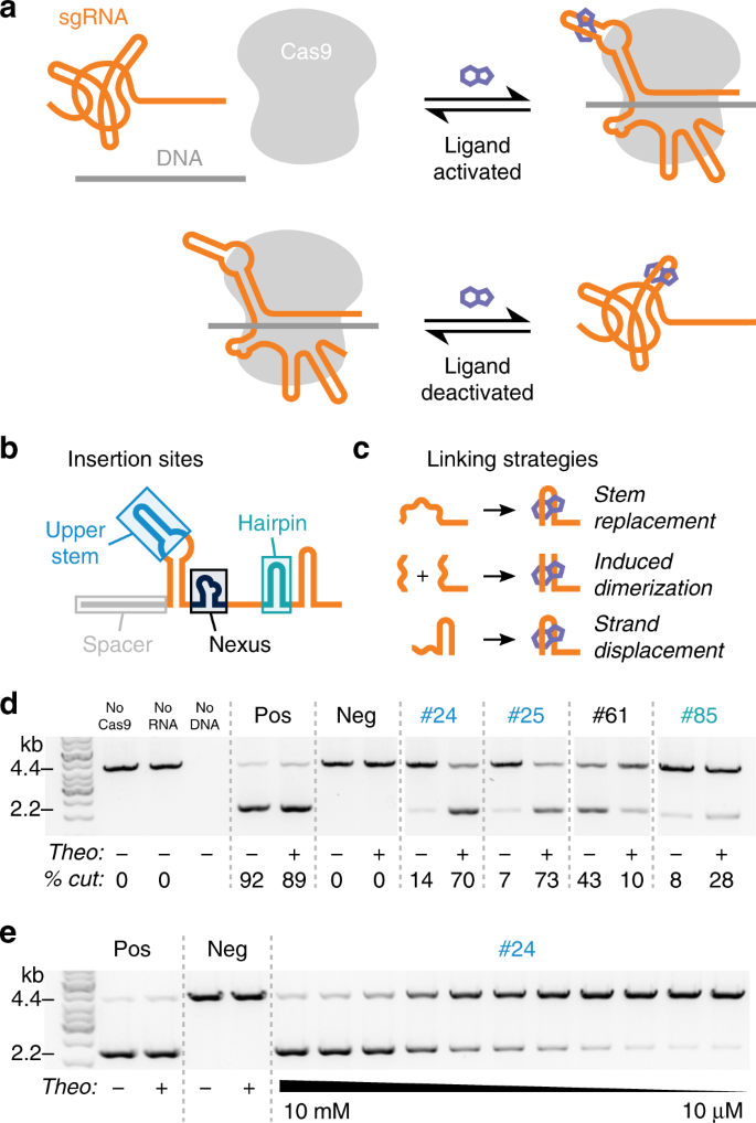 Controlling CRISPR-Cas9 with ligand-activated and ligand