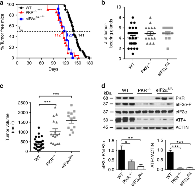An Integrated Stress Response Via Pkr Suppresses Her2 Cancers And Improves Trastuzumab Therapy Nature Communications