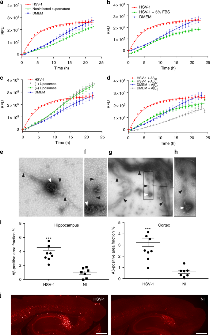 The viral protein corona directs viral pathogenesis and amyloid