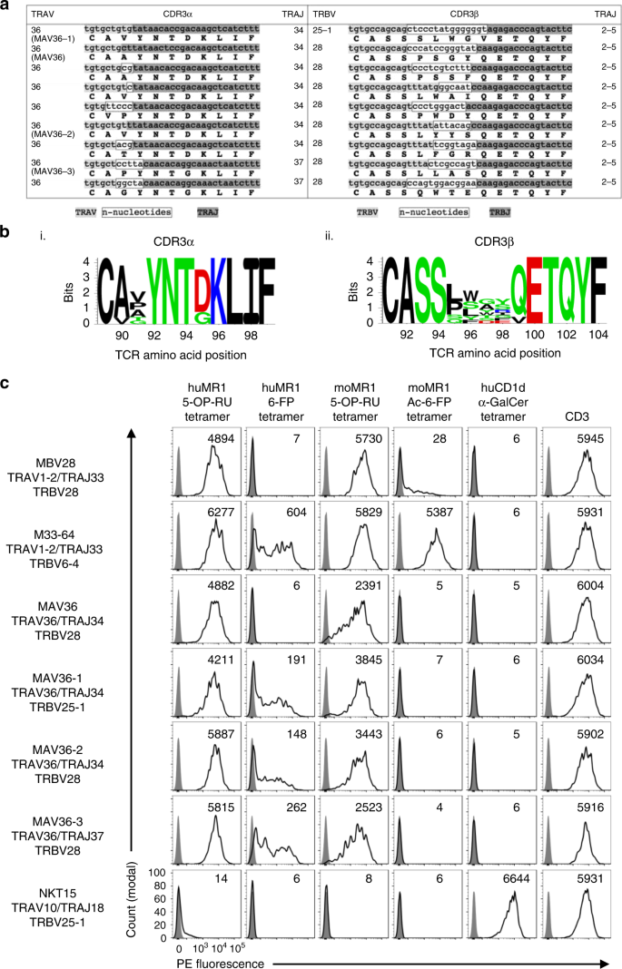 Diverse MR1-restricted T cells in mice and humans   Nature