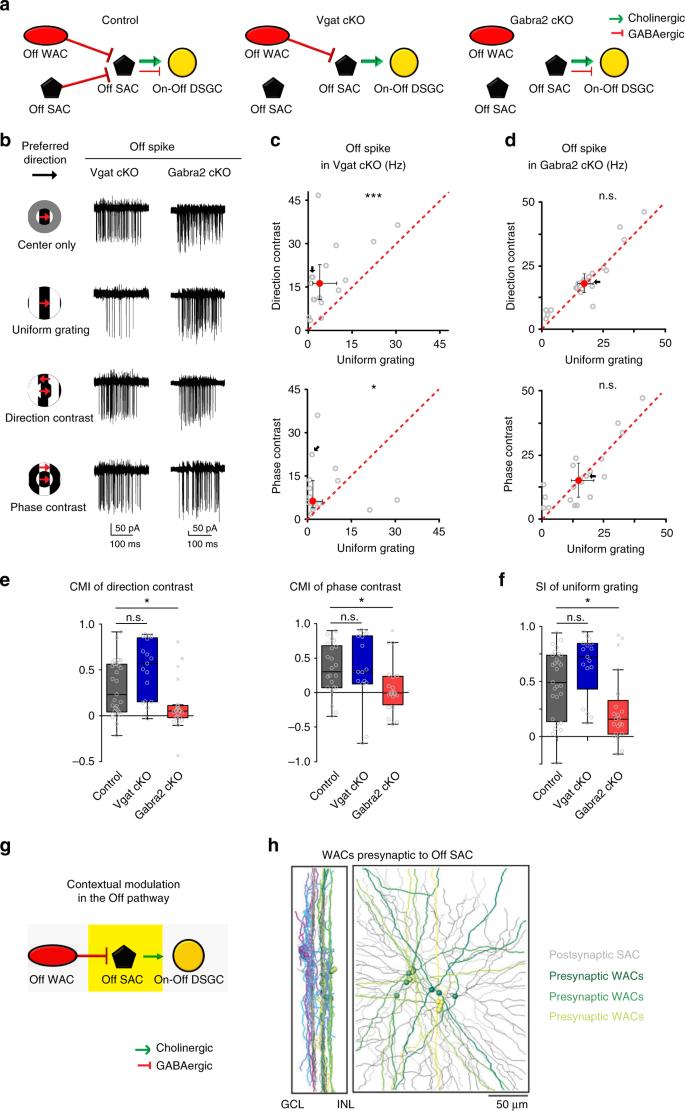 Neural mechanisms of contextual modulation in the retinal