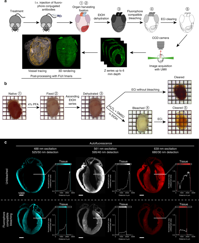 Contemporaneous 3D characterization of acute and chronic