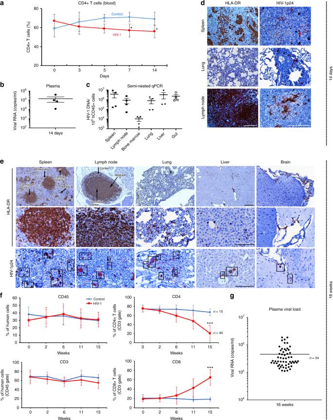 Sequential LASER ART and CRISPR Treatments Eliminate HIV-1
