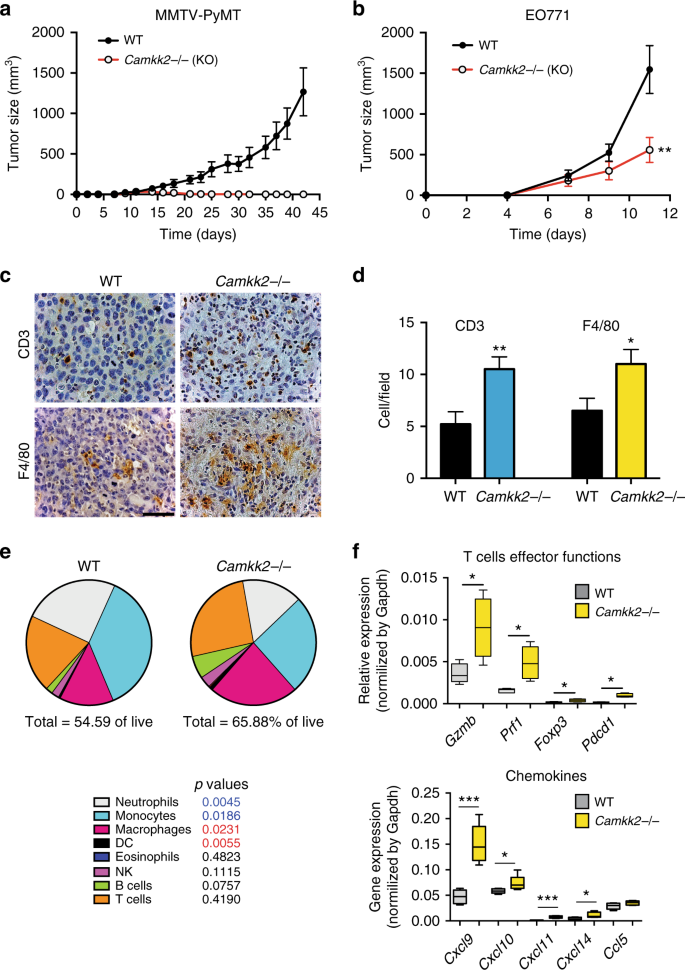 CaMKK2 in myeloid cells is a key regulator of the immune-suppressive