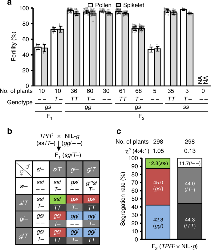 An asymmetric allelic interaction drives allele transmission
