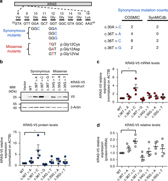 A Pan Cancer Analysis Of Synonymous Mutations Nature Communications