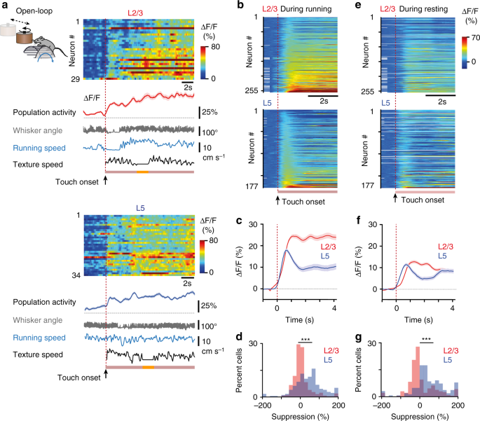 Layer-specific integration of locomotion and sensory information in
