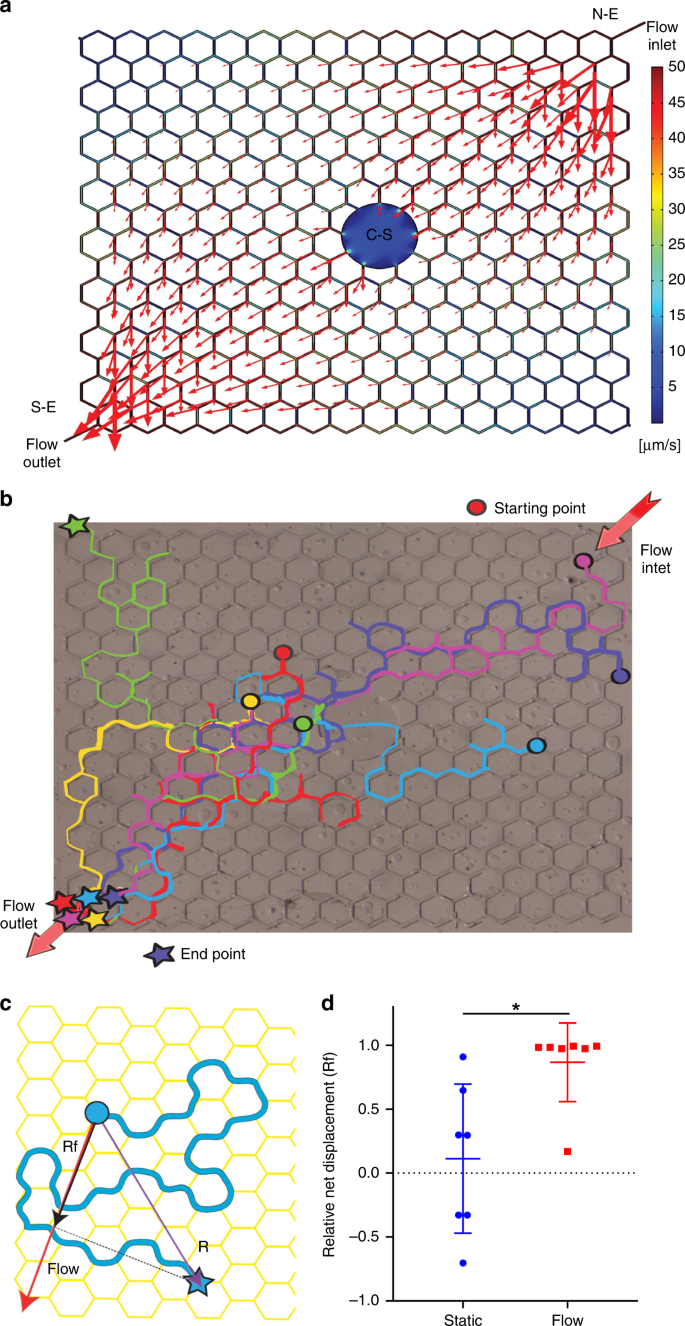 Inherent biomechanical traits enable infective filariae to