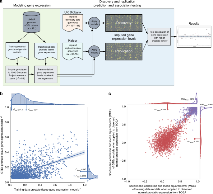 Association of imputed prostate cancer transcriptome with disease risk