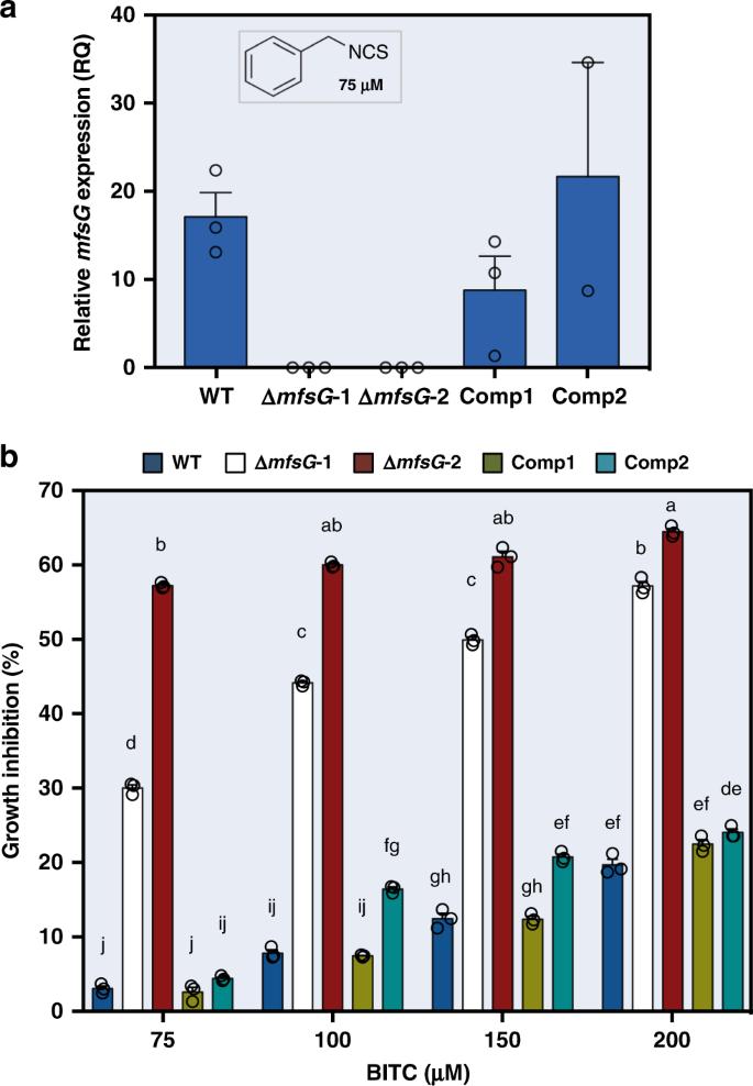 MFS transporter from Botrytis cinerea provides tolerance to
