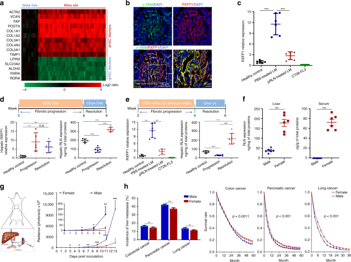 Relaxin gene delivery mitigates liver metastasis and synergizes with c