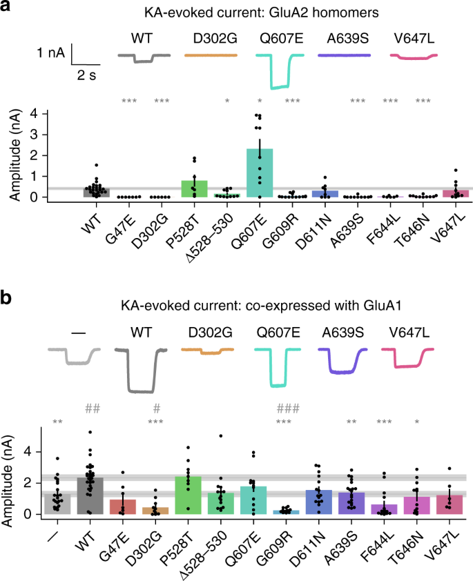 Ampa Receptor Glua2 Subunit Defects Are A Cause Of Neurodevelopmental Disorders Nature Communications