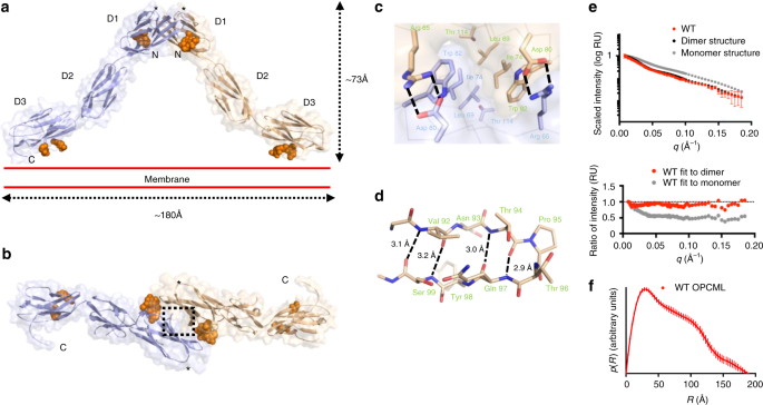 Inactivating mutations and X-ray crystal structure of the tumor suppre