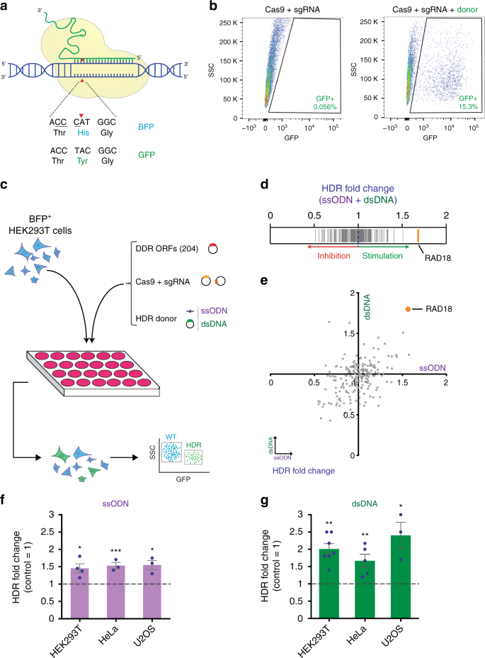 Stimulation of CRISPR-mediated homology-directed repair by