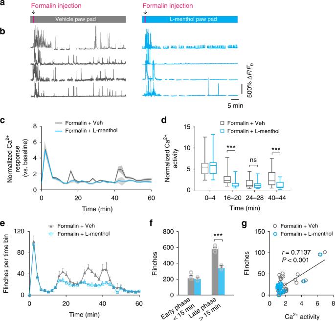 Long-term imaging of dorsal root ganglia in awake behaving