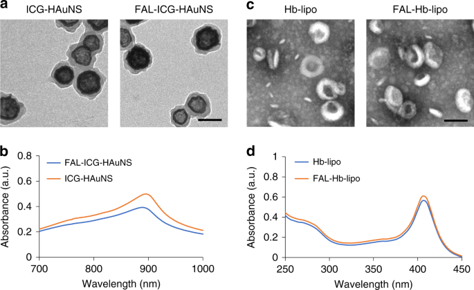 Targeting photodynamic and photothermal therapy to the endoplasmic ret