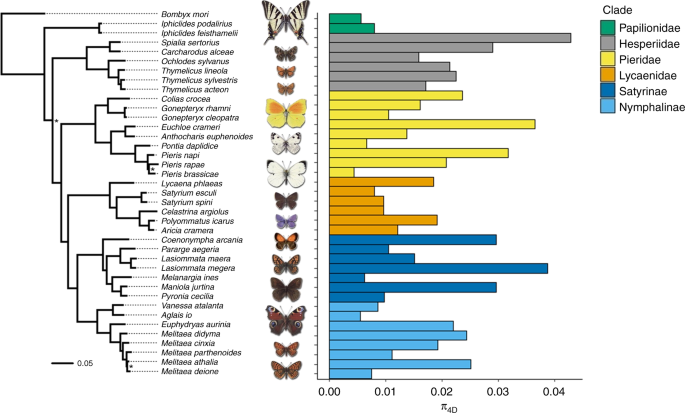 The determinants of genetic diversity in butterflies
