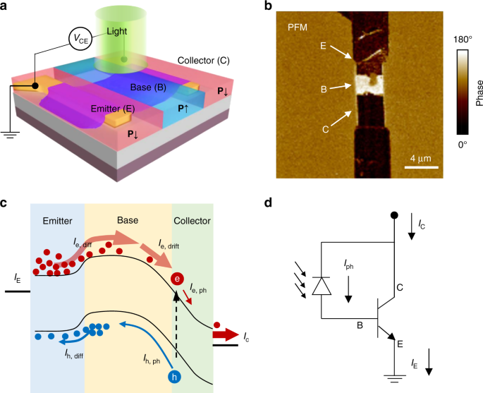 Reconfigurable two-dimensional optoelectronic devices