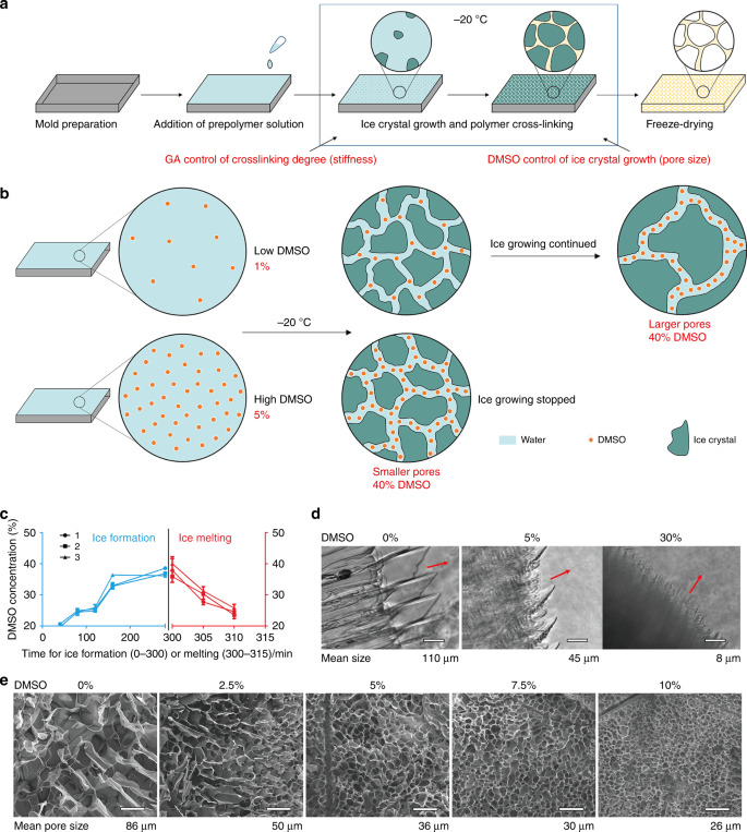 Cryoprotectant enables structural control of porous scaffolds for expl