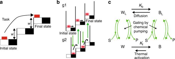 Kinetic asymmetry allows macromolecular catalysts to drive an informat