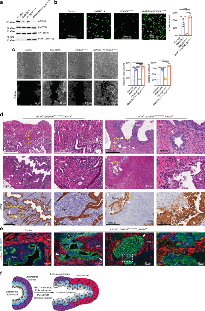 ARID1A and PI3-kinase pathway mutations in the endometrium drive