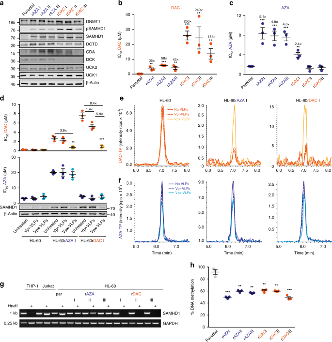 Selective inactivation of hypomethylating agents by SAMHD1 provides