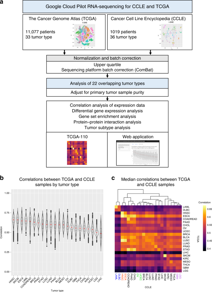 Comprehensive transcriptomic analysis of cell lines as models of prima
