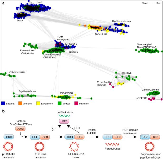 Multiple origins of prokaryotic and eukaryotic single