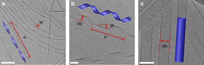 Shape and fluctuations of frustrated self-assembled nano ribbons