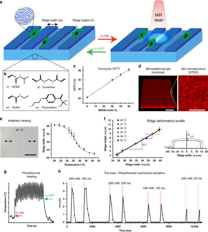 Cellular responses to beating hydrogels to investigate