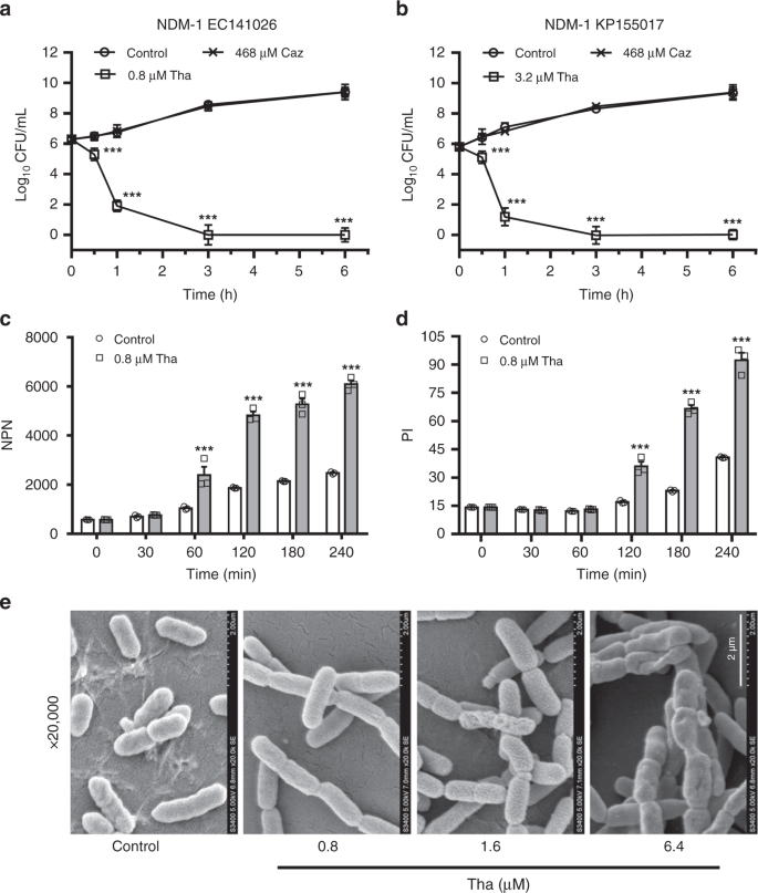 The antimicrobial peptide thanatin disrupts the bacterial