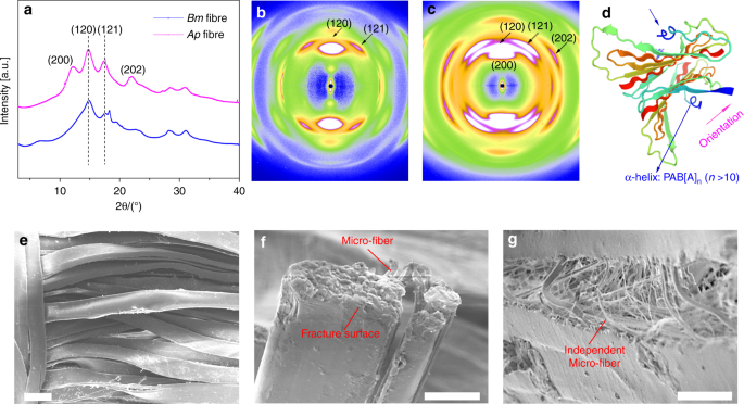 Integrating tough Antheraea pernyi silk and strong carbon fibres for i