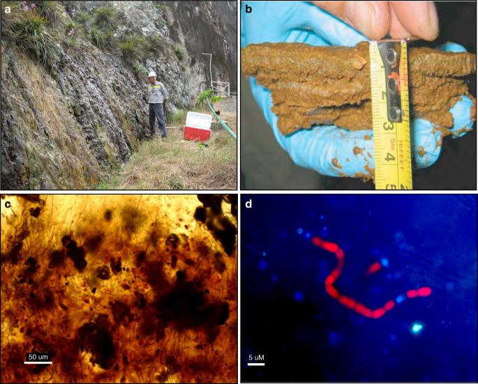 Mesophilic microorganisms build terrestrial mats analogous to Precambr