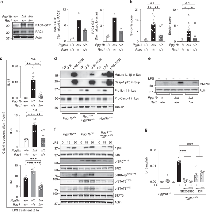 Protein prenylation restrains innate immunity by inhibiting Rac1 effec