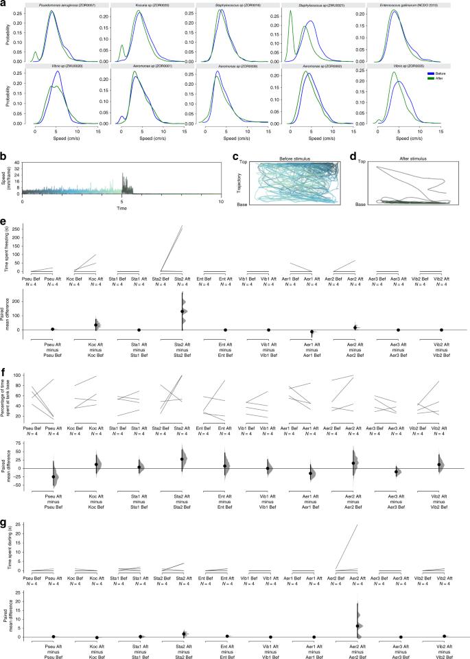 Bacteria evoke alarm behaviour in zebrafish   Nature