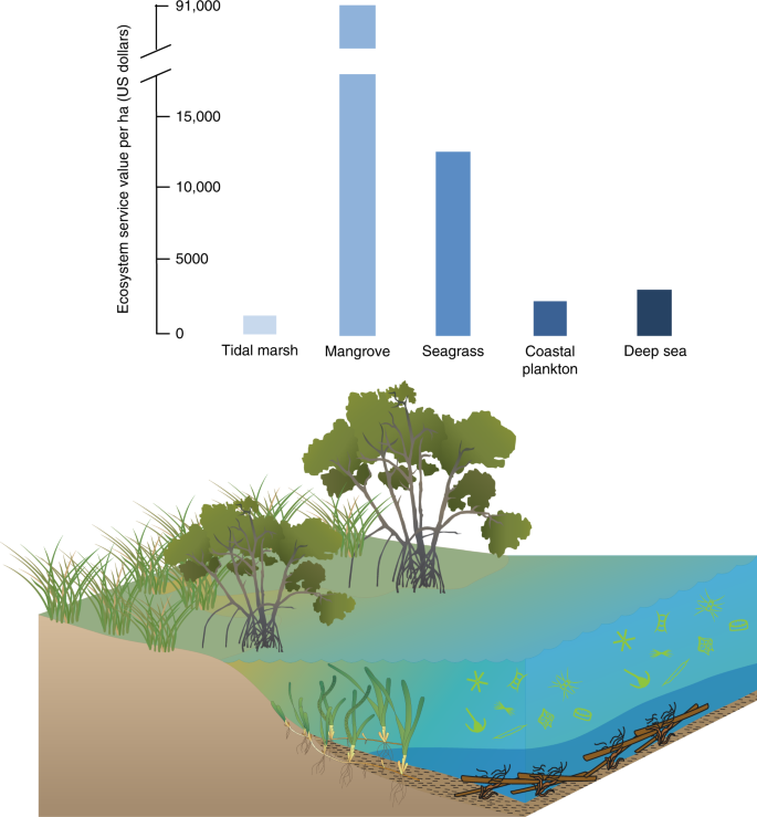 The future of Blue Carbon science | Nature Communications