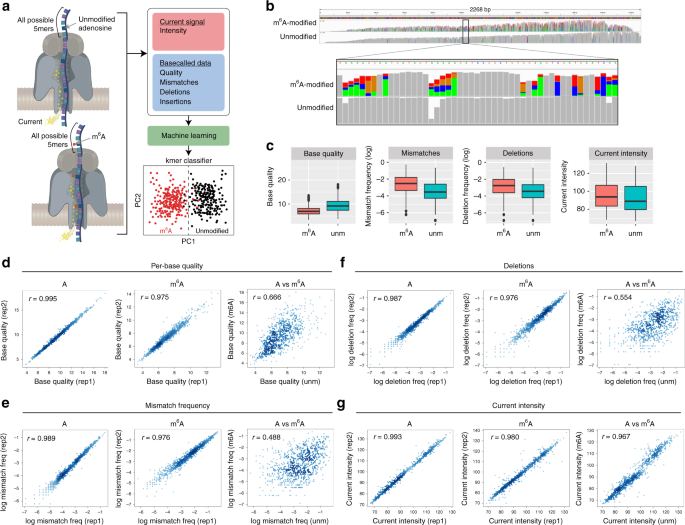 Accurate detection of m 6 A RNA modifications in native RNA sequences