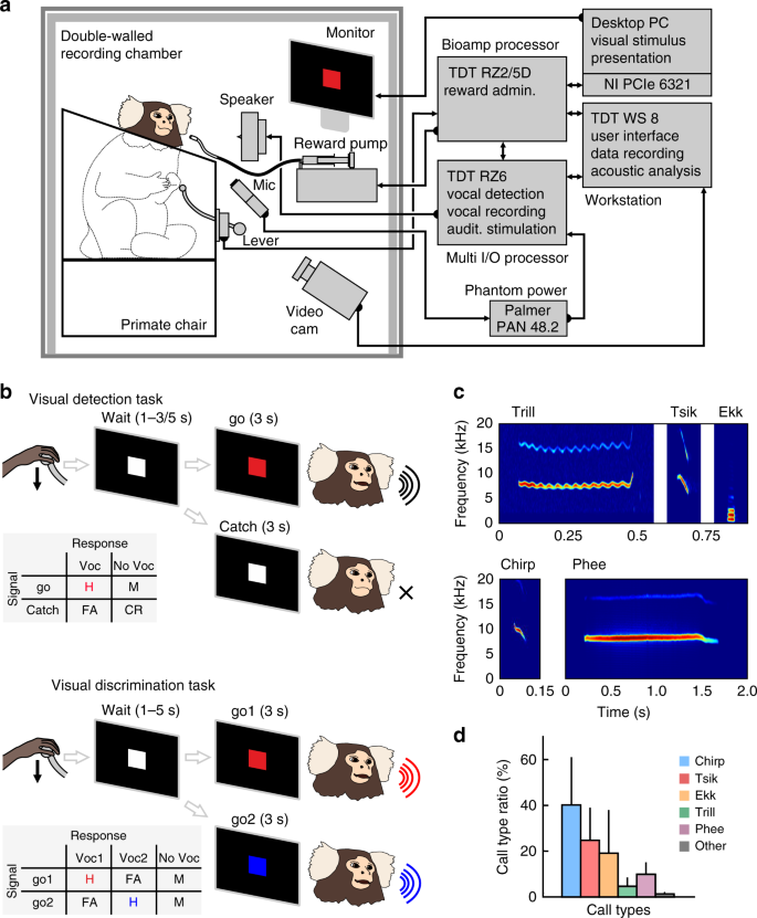 Cognitive control of complex motor behavior in marmoset monkeys
