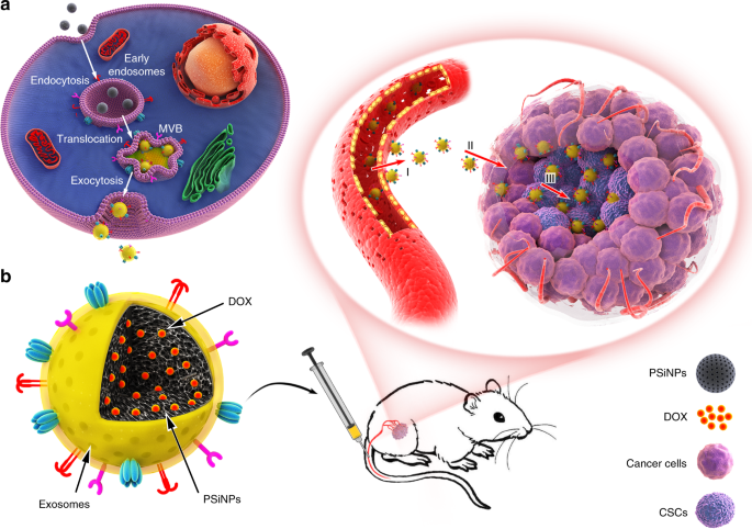Tumor exosome-based nanoparticles are efficient drug carriers for chem