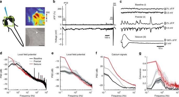 Glia-neuron interactions underlie state transitions to generalized sei