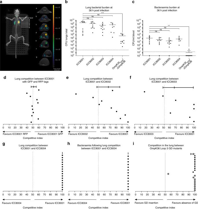 OmpK36-mediated Carbapenem resistance attenuates ST258