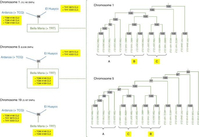 Meiotic sex in Chagas disease parasite Trypanosoma cruzi
