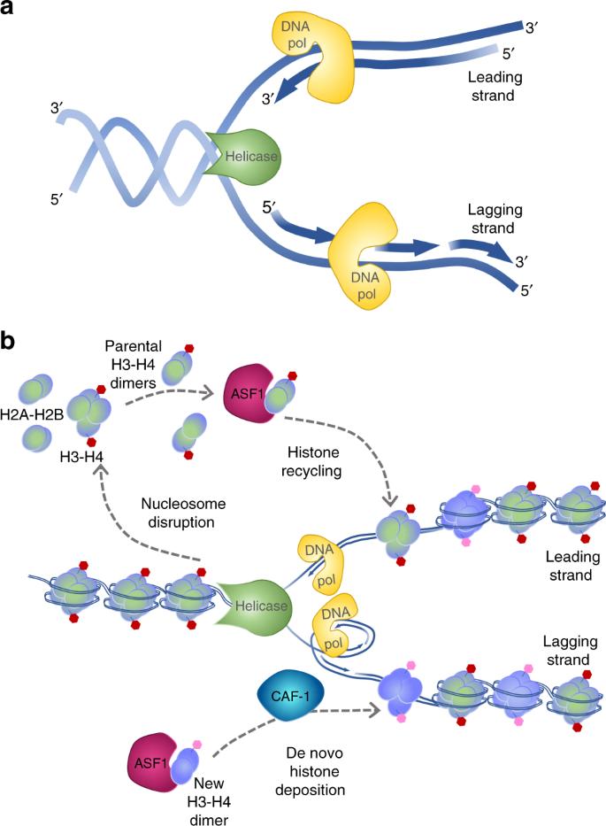 Emerging epigenomic landscapes of pancreatic cancer in the era of prec