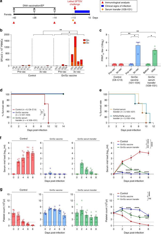 Development of a SFTSV DNA vaccine that confers complete