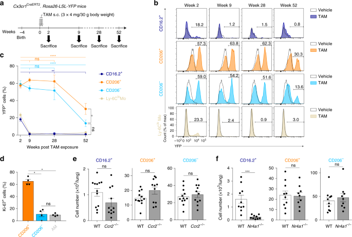 Non-classical tissue monocytes and two functionally distinct
