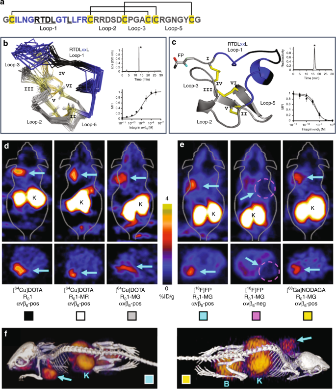 Evaluation of integrin αvβ 6 cystine knot PET tracers to det