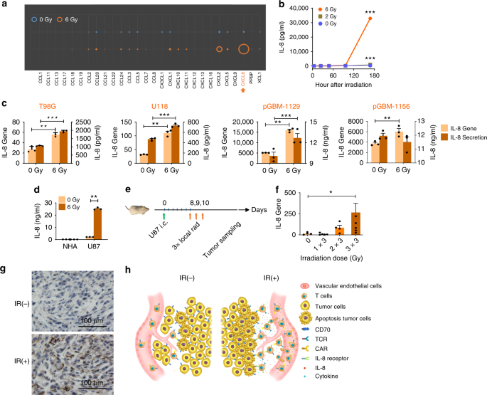 CXCR1- or CXCR2-modified CAR T cells co-opt IL-8 for maximal antitumor